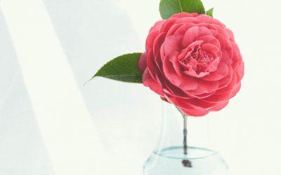 Praziquantel en el tratamiento de la rosácea